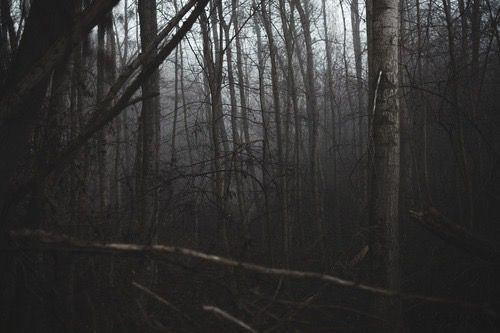 """witchedways: """" bewitched forest """""""