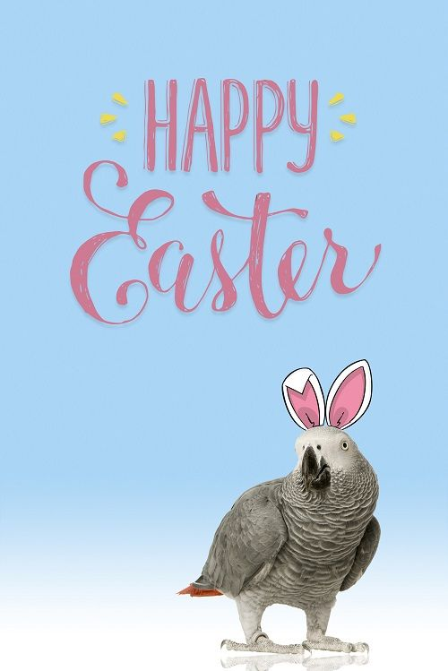 Happy Easter to all our customers and their Parrots.