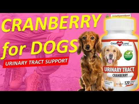 Best Supplement And Multivitamin For Pet Youtube In 2020 Urinary Tract Pet Life Prevent Uti
