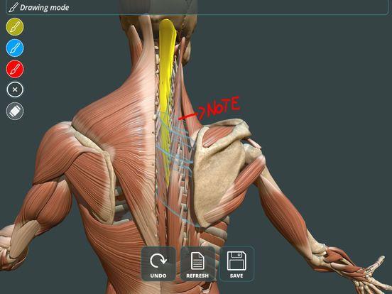 Mejores 8 imágenes de anatomia Dubai en Pinterest | Anatomía, Dubai ...