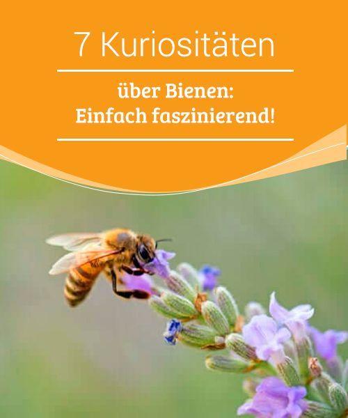 7 Kuriositaten Uber Bienen Einfach Faszinierend In 2020 Bienen