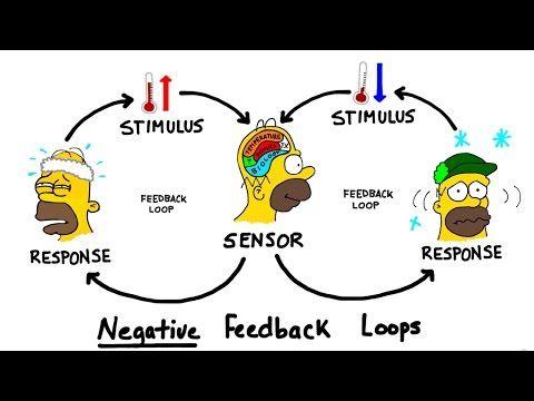 Homeostasis Rosecransclassroom Biology Notes Nursing Notes Nursing School Studying
