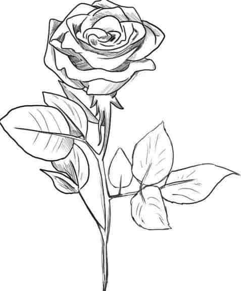 Image Result For Gambar Bunga Sketsa Bunga Gambar Bunga Lukisan Bunga