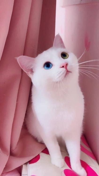 Pin By Antonella Gimenez On Pets Cute Baby Cats Pretty Cats Gorgeous Cats