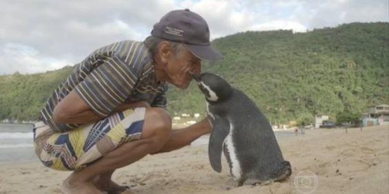 Ein Pinguin schwimmt jedes Jahr 8000 Kilometer, um den Mann wiederzutreffen, der ihm das Leben gerettet hat