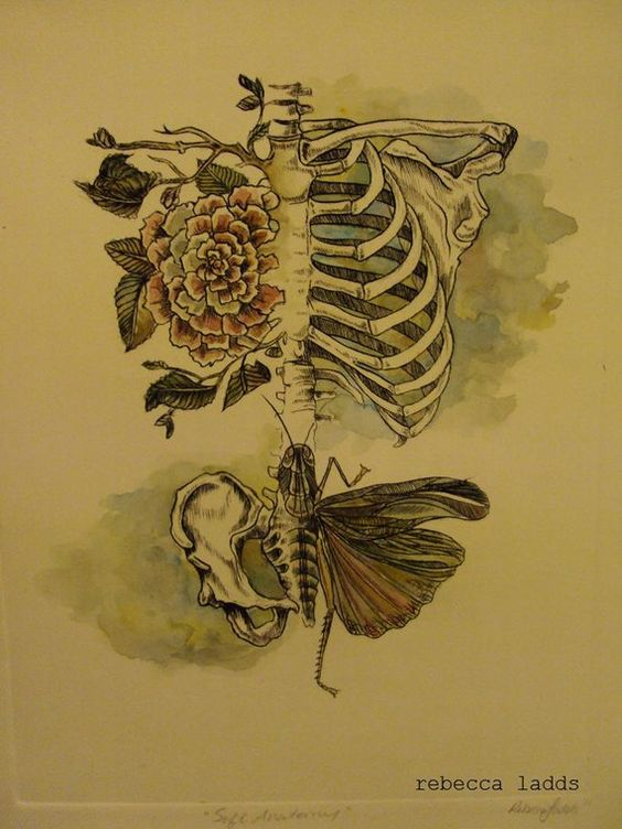 Beautiful spring and anatomy tattoo on pinterest for Grasshopper tattoo supply