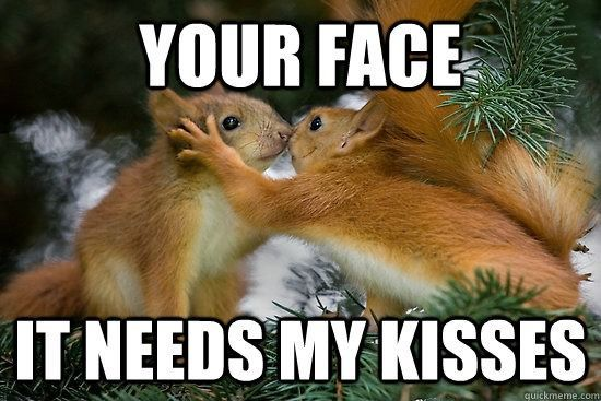 32 Hilarious And Silly Animals Funnycats Funnyanimals Funnypics Animalmemes Catmemes Squirrel Funny Animals Kissing Cute Animals Kissing
