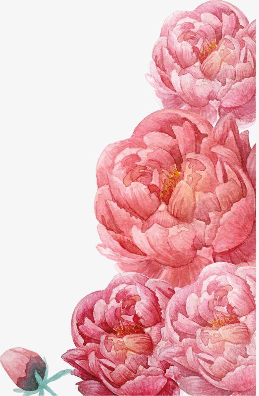 Pink Watercolor Flowers Watercolor Clipart Pink Watercolor Png
