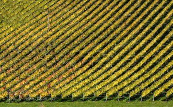 Vineyard Pattern by Christoph_Hilger