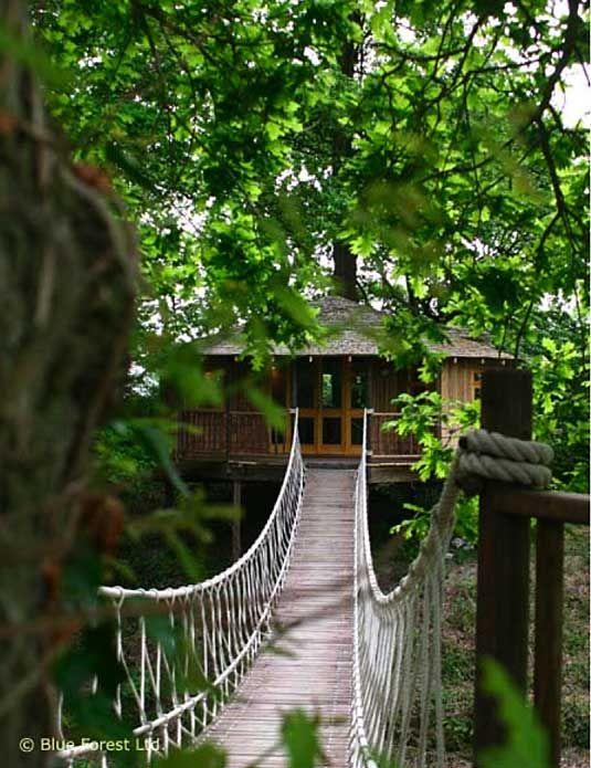 house: Treehouses Rainforest, Ewok Treehouses, Guest House, Tropical Treehouses, Treehouses Images, House Treehouse, Rainforest Treehouse, Treehouses Finca