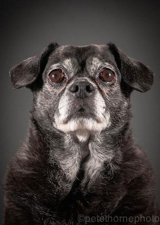 Old Dog - Portrait