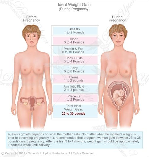 can u lose weight early pregnancy