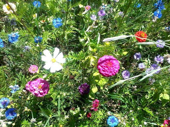Vous souhaitez ajouter une note champêtre et colorée à votre jardin tout en vous épargnant le travail de la tonte? Alors pourquoi ne pas créer une jachère fleurie, comme à Eyrignac? :)