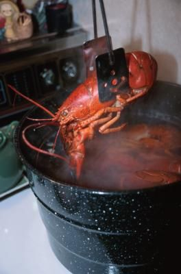 How to heat a lobster that is already boiled. Going to get our lobster steamed so I don't have to do it myself!I would rather just reheat it.