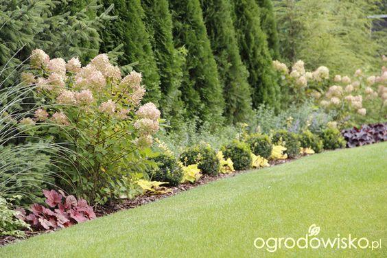 brzoza w ogrodzie ogrodowisko - Szukaj w Google