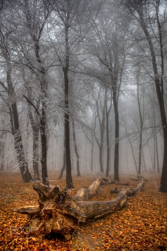 Seasons change  - Dobogókő, Hungary