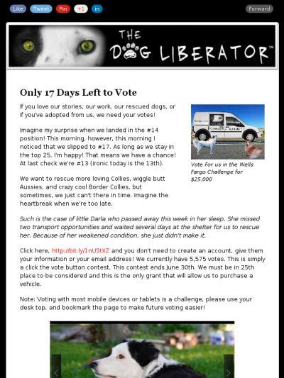 Check out this Mad Mimi newsletter #Rescue #Dogs #Herding #Aussie #Collie #BorderCollie #AustralianShepherd