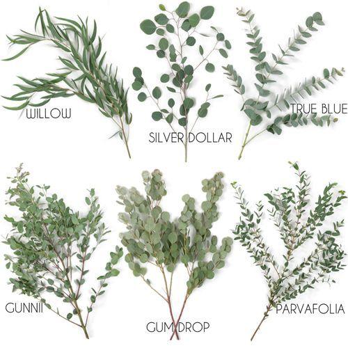 Types Of Eucalyptus Wedding Flowers Floral Wedding Greenery Wedding