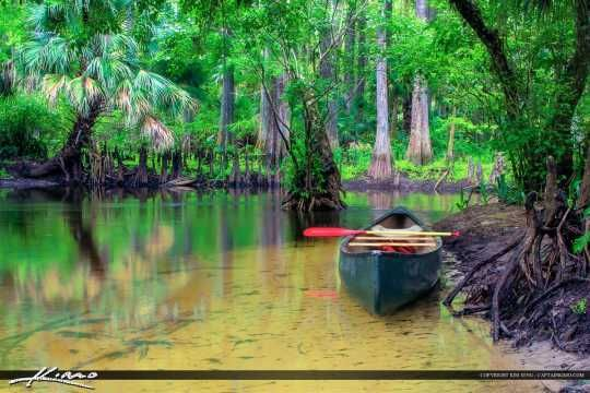 Loxahatchee River Canoe along the Shore