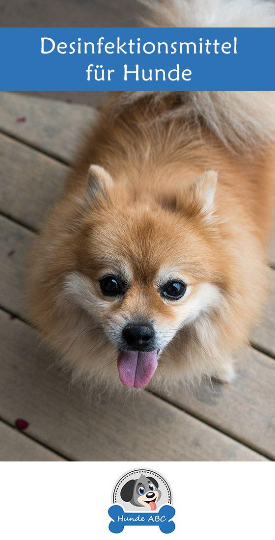 Desinfektionsmittel Fur Hunde Die Neuesten Hundeartikel