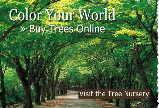 Get 10 Free Trees for joining!  Color Your World. Visit the Tree Nursery Today.