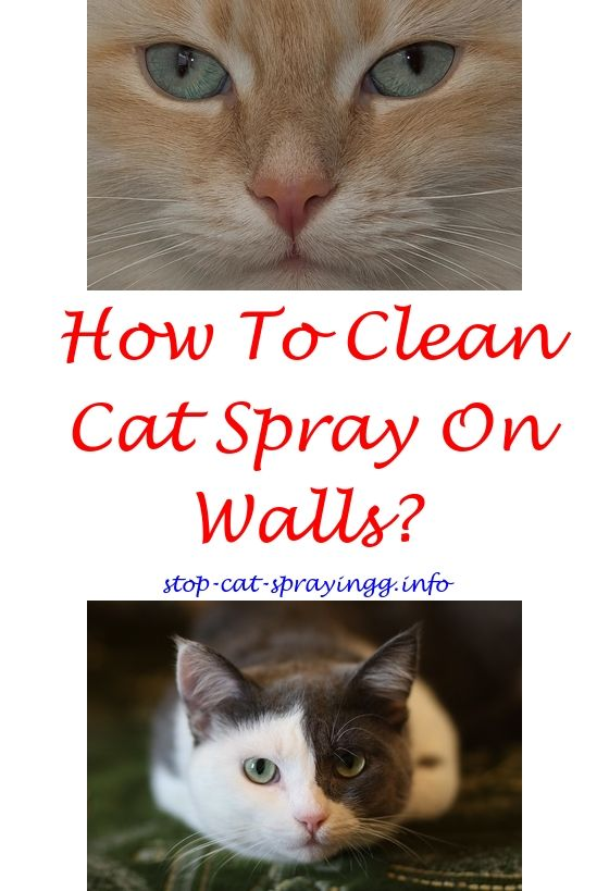 Duck Boat Plans Download Cat Spray Male Cat Spraying Flea Spray For Cats