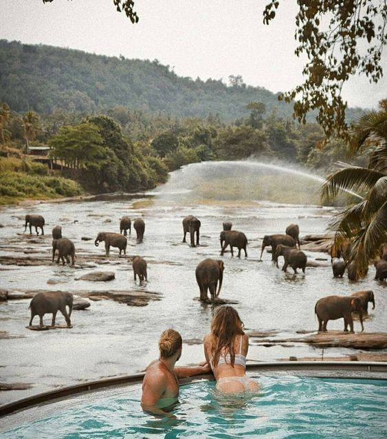 I love that view - elephant's have fun
