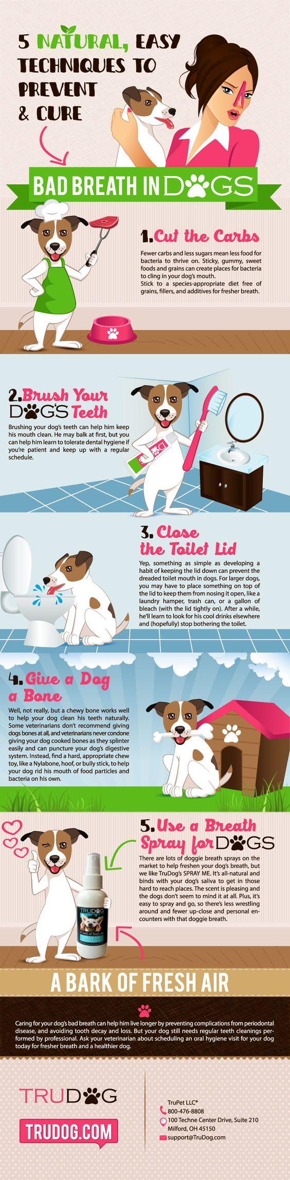 Discover 5 Natural/Easy Techniques to Prevent & Cure Bad Breath in Dogs http://trudog.com/lp/spray-me-3-p?utm_source=Pinterest&utm_medium=social&utm_campaign=Jeremy%20Pinterest&utm_term=organic&utm_content=5%20Techniques%20new