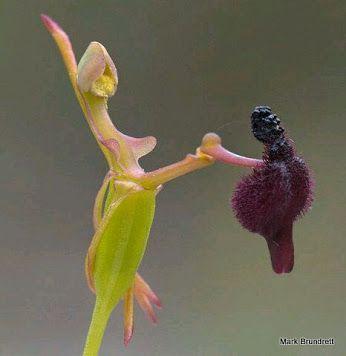 Orquídea exótica.