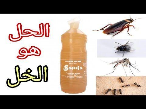 أقوى الحلول للقضاء على الحشرات المنزلية بكل أنواعها بدون مبيدات كيماوية لصيف مريح Youtube Diy And Crafts Vegetable Garden Diy