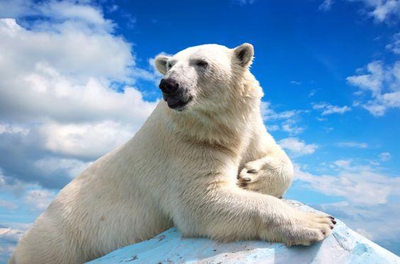 Los 6 contaminantes del calentamiento global: causas y consecuencias