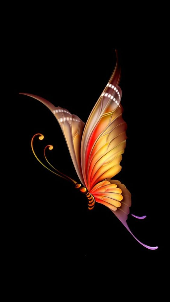 Amoled Iphone Backgrounds Beauty Art Drawings Butterfly Wallpaper Backgrounds Butterfly Wallpaper