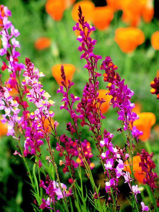 Top Annual Plant Pairings – Better Homes and Gardens Plant Encyclopedia