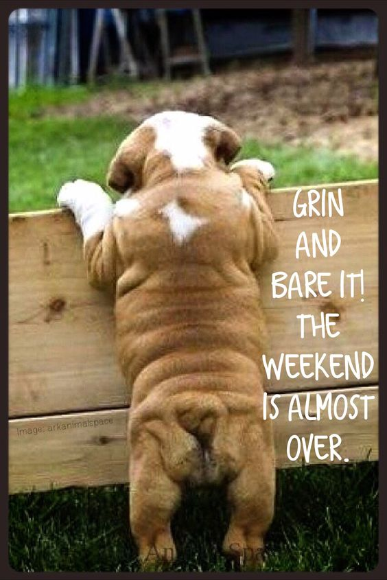 OK! it's the weekend what r u doing?