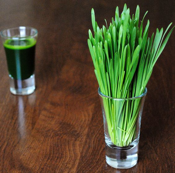 Superfood: Wheatgrass