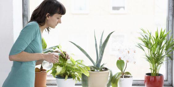 Έξι φυτά εσωτερικού χώρου που μπορούν να καθαρίσουν την ατμόσφαιρα του σπιτιού σας