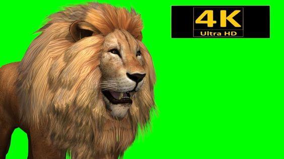 Free Green Screen Animals Lion Chroma Key 3d Animation 4k Hd