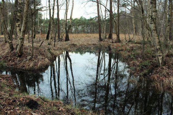 Stikelkamper Wald, Ostfriesland