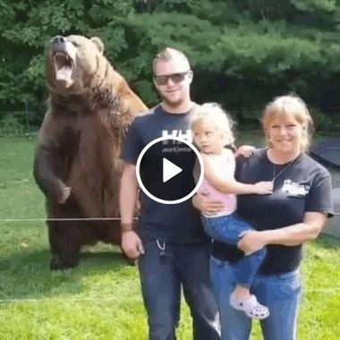 Urso também sabe pousar pra fofos