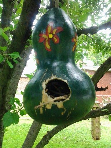 Wren nest.