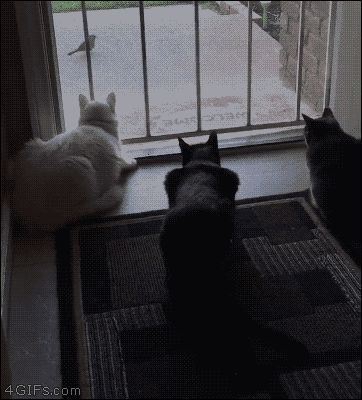 "4gifs: "" ""OMG guys look a bird!"" -dog. [video] """