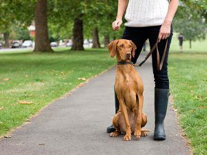 Pin By Hazel Brown On Pet Training Tips And Hints Dog Park Dogs