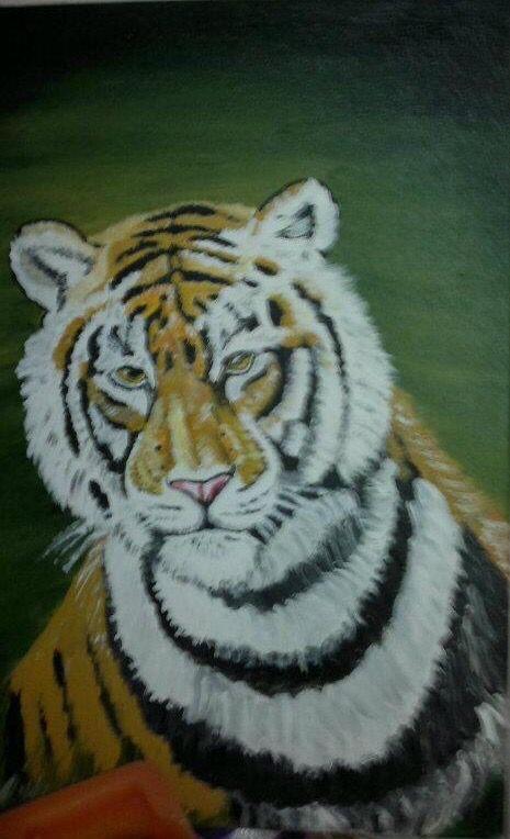 Tiger my love 50