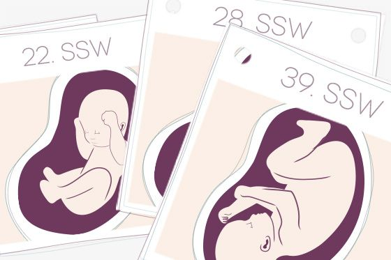 Die SSW berechnen mit dem Schwangerschaftsrechner! Alle Infos für Ihre 9 spannenden Monate im Schwangerschaftskalender. Inklusive Terminplaner!