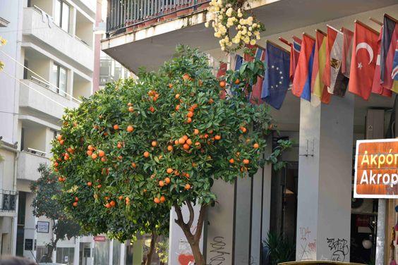 Афины в декабре поразили тем, что на всех улицах мандариновые, апельсиновые и лимонные деревья, покрытые фруктами