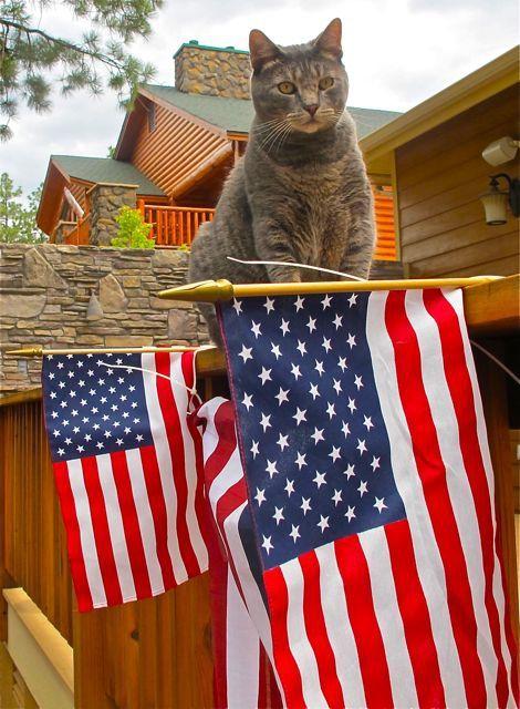Patriotic Cat:
