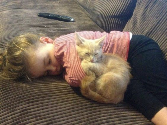 A long-haired cat (with red claw caps) snuggles with a sleeping infant — after some much-needed kneading