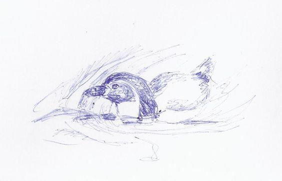 Vorbereitungen für die Malevents und Aquarellkurse im Rostocker Zoo | Skizze schwimmender Pinguin (c) Frank Koebsch