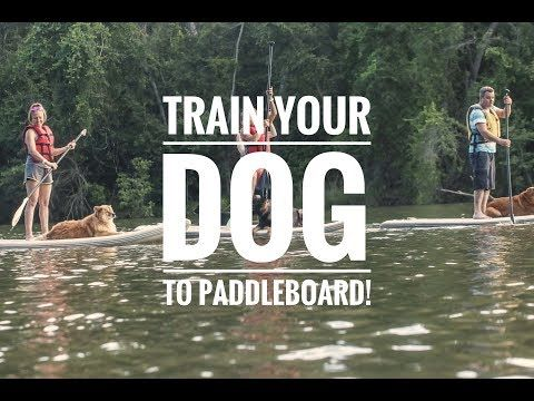 How To Train Your Dog To Paddle Board With You Youtube Dog