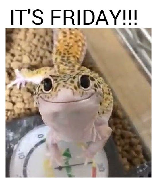 Friday Lizard Happy Friday Meme Funny Memes Harry Potter Memes Animal Memes